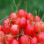 Tart Cherries To Lose Weight